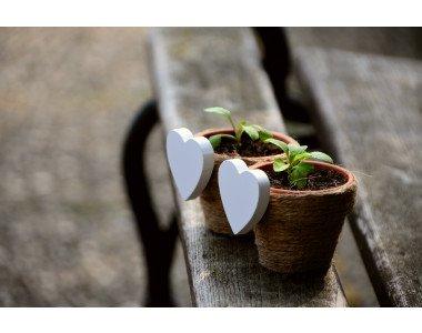 8 цветя, които да засеете за разсад през март