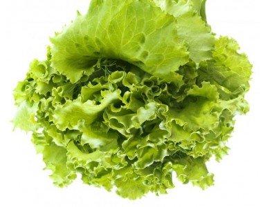 Торовете Hydrofert - за по-добра реколта от зелени салати