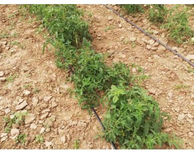 Биона възстановява зеленчукова градина след порой и градушка