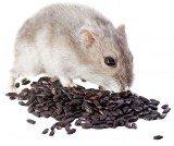 Мишка яде семена