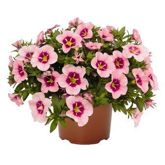 Разсади цветя