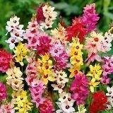 Шарени цъфнали цветя
